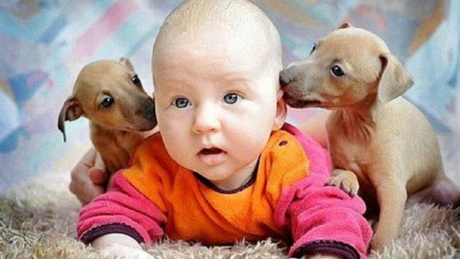 Очень милые фото детей и животных